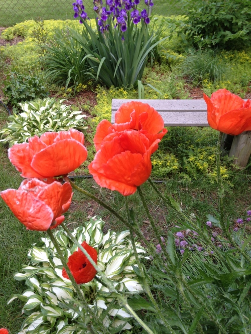 Today In the Garden/Oggi nel giardino
